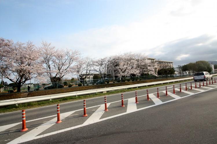 福島県南相馬市の原町高校の桜