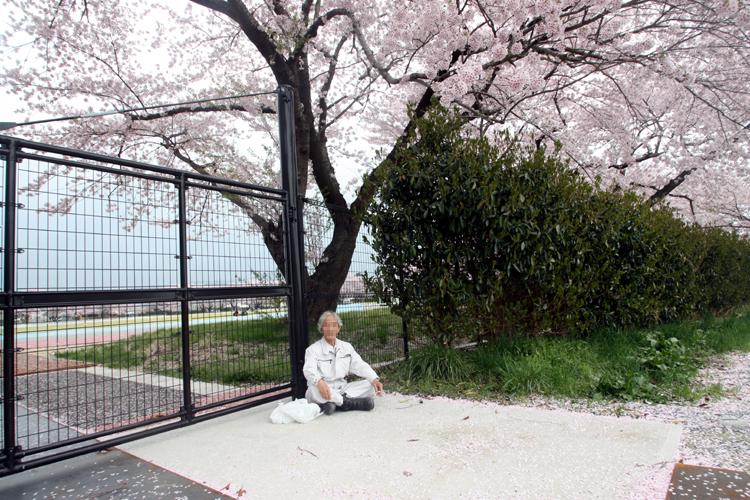 南相馬市相馬野馬追催事場の桜